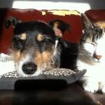 Sunbathing Buddies!